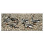 Профиль голографический Real-Geese Webfoot комплект гусей белолобых 12шт. WF901PS